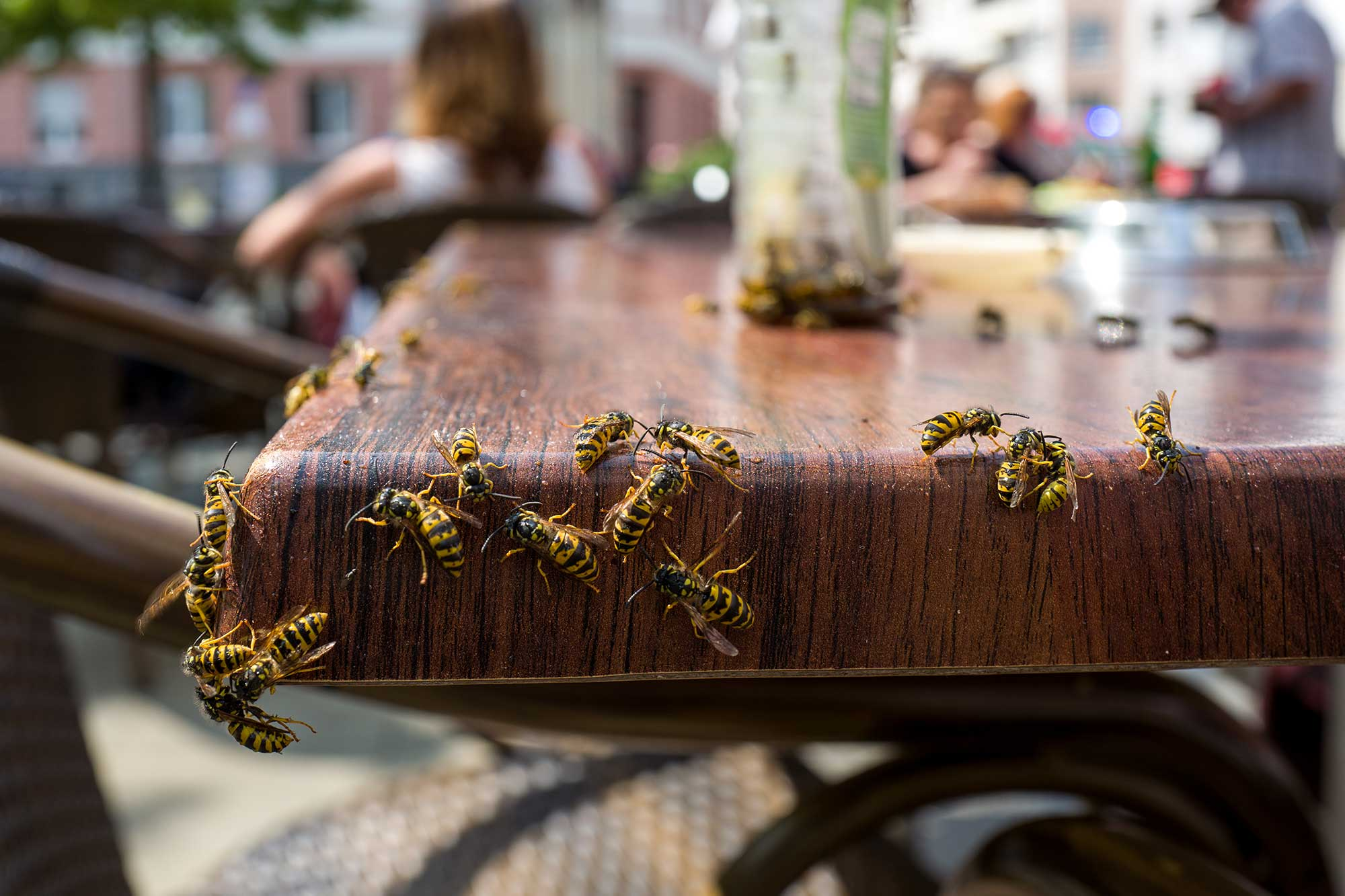 Wasps crawling on a table
