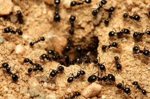 Ant problems and treatment